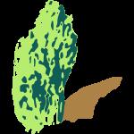 enrisbuske