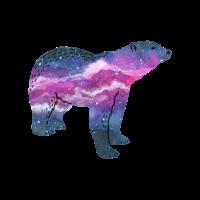 Space Bär
