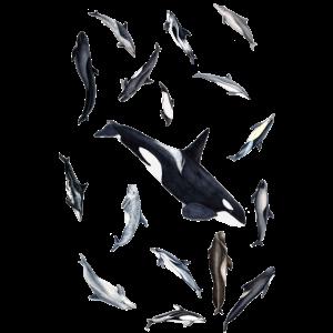 Delfine und Orcas - Delphine rundum - Dauphins