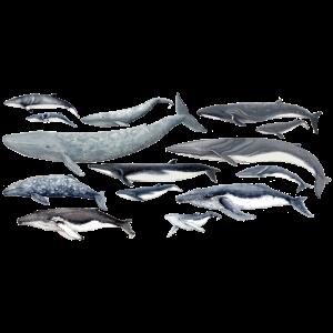 Wale Vielfalt fond transparent