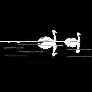Nacht Swan