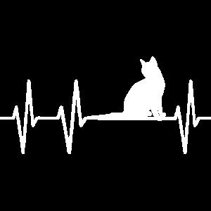 Katze Katzen Herzschlag Herz Puls Herzklopfen Cat