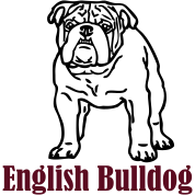 engelse bulldog ©  www.dog-power.nl
