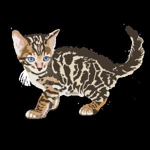 Katzenbaby Leopardenkatze Bengalkatze