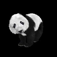 süßer Pandabär