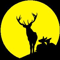 Hirsch Hirsche Sonne