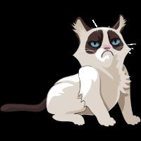 katze grumpy