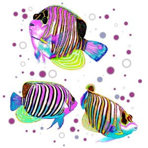 Angelfish bunt