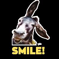 Funny Amorgos Donkey – Esel