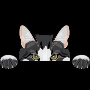 Spannende lustige Katze