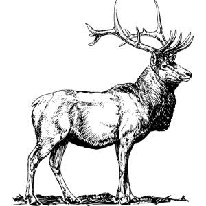 Silueta ciervo real transparente