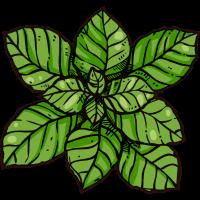 Organische Minze Pflanze