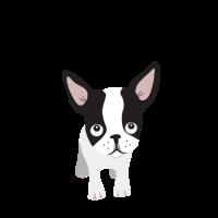 """Französische Bulldogge """"Adopt Me"""" Lustig Hund"""
