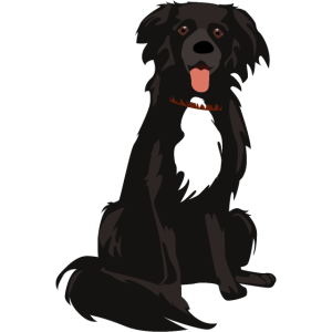 Border-Collie-Illustration