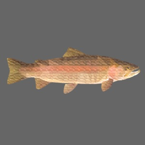 low-polygon-trout art.png