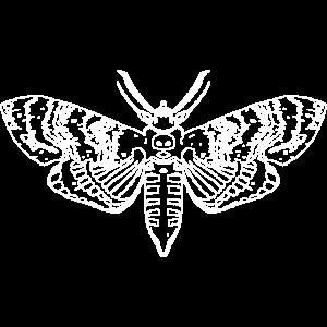 Motte Moth Nachtfalter