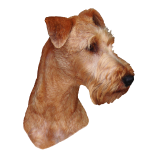 Irish Terrier_02