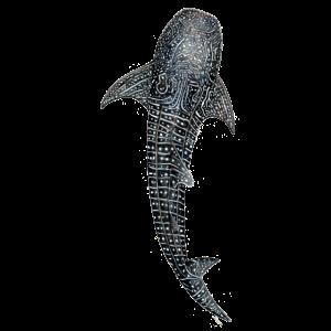 Walhai Entwurf für Taucher, Angler