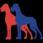 2 German mastiffs / 2 Colors