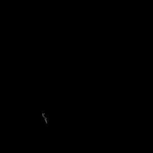 Regenbogen schwarz Spaniel Breton