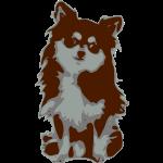 chihuahua hunde hund