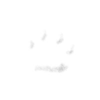 All dogs are Pawsome