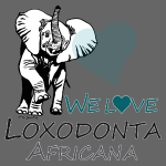 WE LOVE LOXODONTA AFRICANA