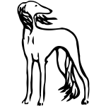 Saluki