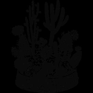 kakteen-pflanzschale-stil