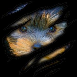 Yorkshire Terrier in mir