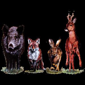 Wild-Quartett