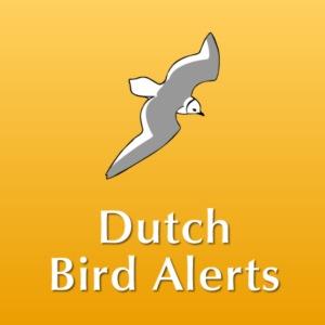 Dutch Bird Alert