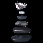 Gallets et orchidées zen