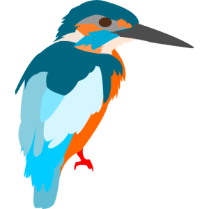 vogel bunt Geschenk Geschenkidee Eisvogel