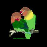 unzertrennliche 2 kleine bunte Papageien