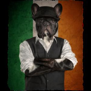 IRISH BULLDOG Ireland Shamrock St Patricks Day
