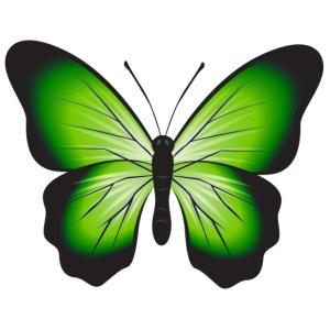 Schmetterling Butterfly Frühling