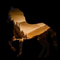 pferd Landschaft Natur reiten