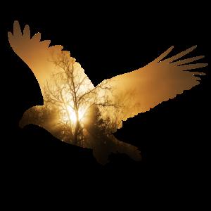 adler Baum fliegen Vogel frei Sonne ökologie