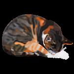 """Katze """"Thamar"""""""