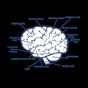 Gehirn-Diagramm-anatomisches medizinisches Biologie-Geschenk