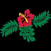 Flora, Hibiskusblüten
