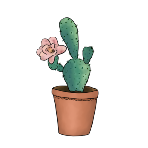Kaktusblüte
