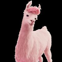 Jules das Pinke Lama