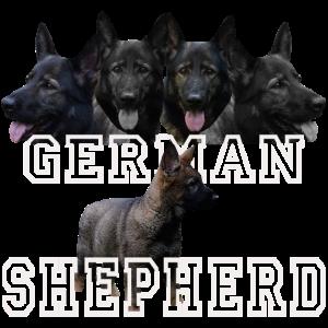 Schäferhund,Hundesport,Hundekopf,Hund,Hunde,Welpe,