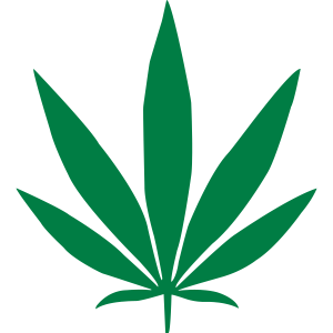 Cannabis Pflanze
