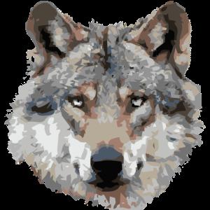 Wolf (grau)