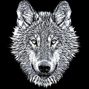 Weißer Wolf Wolfskopf Wölfe Raubtier cooles Tier