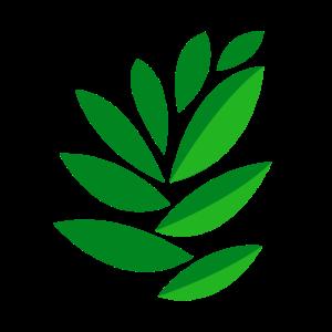 Zeichnung Blätter