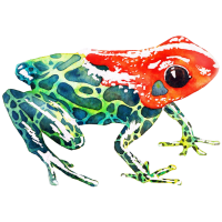 Frosch mit rotem Kopf